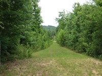 120 Acre Hunting - Pine & Hardwoods : Ashville : Saint Clair County : Alabama
