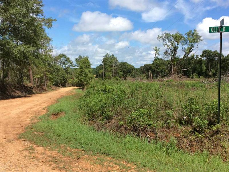 Frost Road Tract : Luverne : Crenshaw County : Alabama