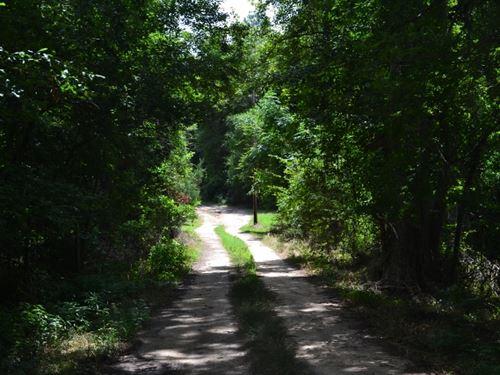 Live Oak, Toombs Co. : Lyons : Toombs County : Georgia