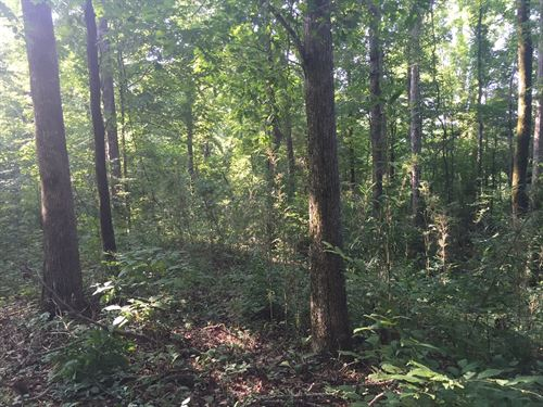 Piney Creek, Hunter's Dream Prop : Yazoo : Mississippi