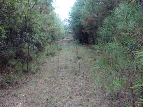 166 Acres In Greene County : Hillman : Greene County : Mississippi