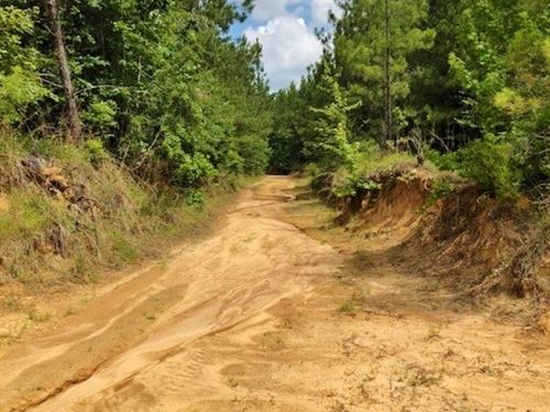 40 Acres Timberland For Sale Crosby : Crosby : Amite County : Mississippi