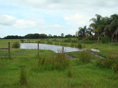 Fully Improved Cattle Ranchland : Venus : Highlands County : Florida