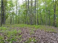 32+/- Ac Mature Hardwoods : Goodwater : Coosa County : Alabama