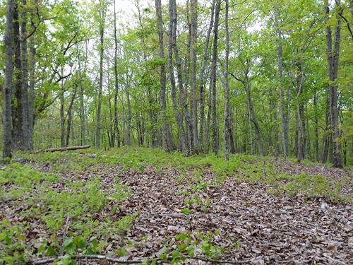 32+/- Ac Mature Hardwoods : Goodwater : Coosa County : Alabama