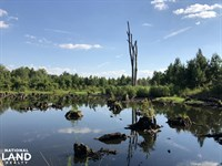 Bamberg Goodland Rd Timber/Hunting : Bamberg : Bamberg County : South Carolina