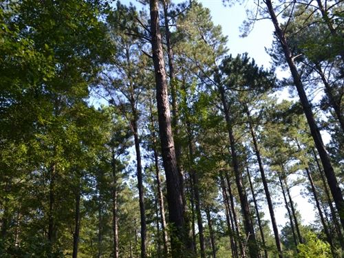 Bellamys Tract : Swainsboro : Emanuel County : Georgia