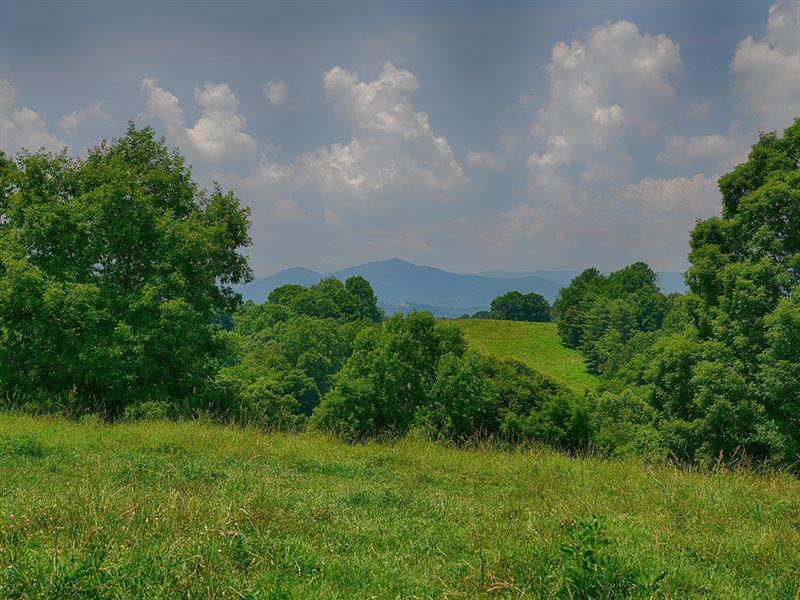 Productive Nelson Cattle Farm : Arrington : Nelson County : Virginia