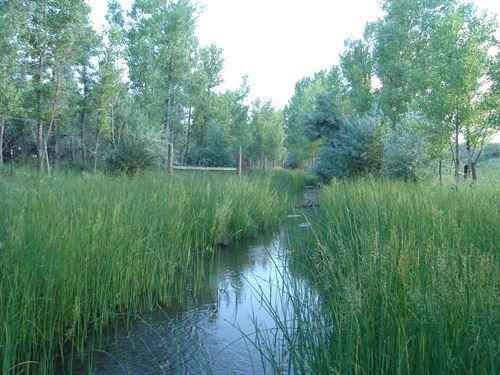Bijou Creek Oasis : Deer Trail : Elbert County : Colorado