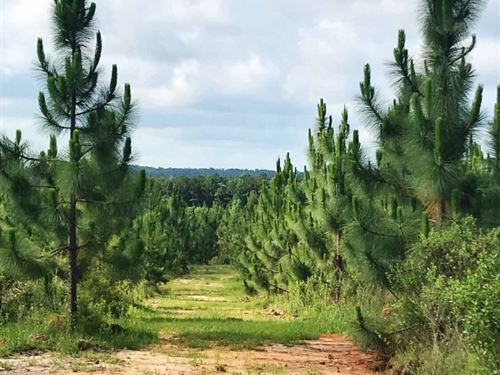 215 Acre Timberland Hunting Investm : Foxworth : Marion County : Mississippi