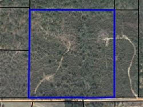 Timberland In Geneva County : Slocomb : Geneva County : Alabama