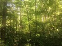11 Wooded Acres In Metcalfe County : Edmonton : Metcalfe County : Kentucky