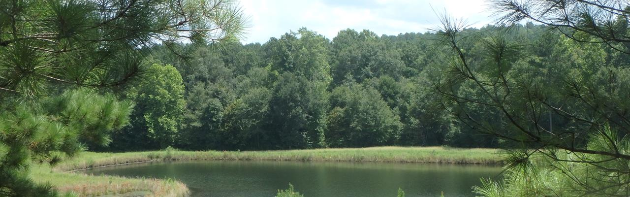 Cw16 Timber, Hunting And 5 Ponds : Jeffersonville : Twiggs County : Georgia