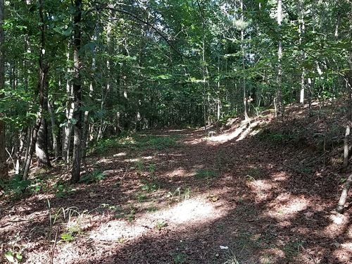 Beard Tract 64+/- Acres : Newell : Randolph County : Alabama