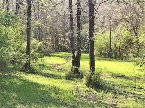 40 Acres Timberland For Sale Meadvi : Meadville : Franklin County : Mississippi