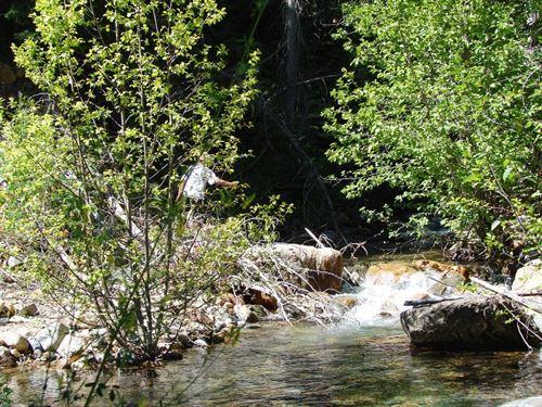 Quartz Creek : Superior : Mineral County : Montana