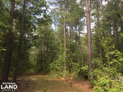 Cassatt Timber Tract : Cassatt : Kershaw County : South Carolina