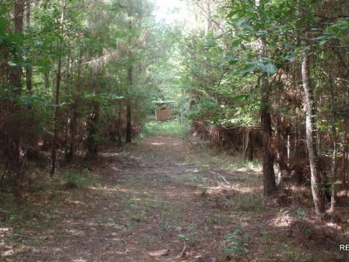 37.9 Ac, Timberland For Rural Home : Jasper : Texas