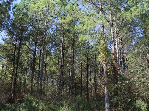 Rogersville's Treasure Forest : Rogersville : Lauderdale County : Alabama