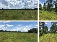 Middle Haw Creek Ranch & Timberland : Bunnell : Flagler County : Florida