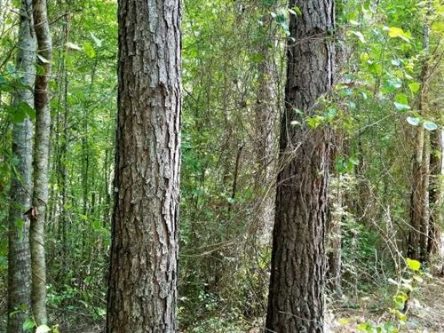 80 Acre Good Pine And Mixed Hardwo : Ramer : McNairy County : Tennessee