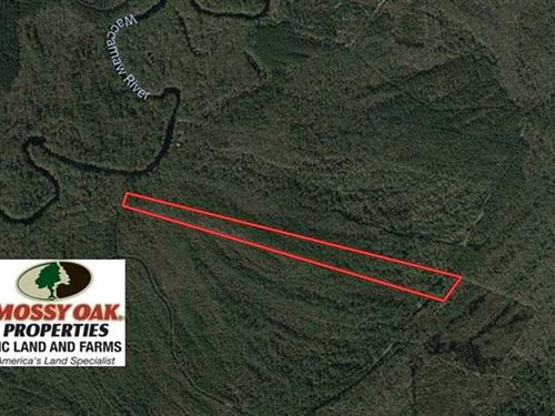 23.15 Acres of Hunting And Timber : Ash : Brunswick County : North Carolina