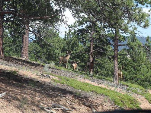 Reinecker Ridge Ranch : Hartsel : Park County : Colorado