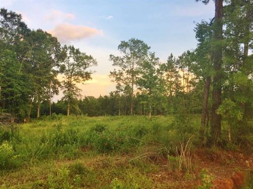37 Acres Land For Sale Gloster, Ami : Gloster : Amite County : Mississippi