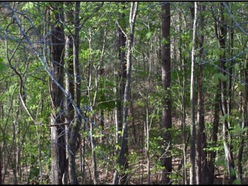 130 Acres In Choctaw County In Acke : Ackerman : Choctaw County : Mississippi