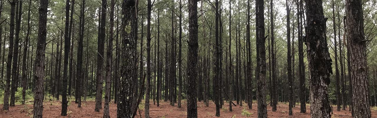 The Zion Chapel 183 Farm : Glenwood : Coffee County : Alabama