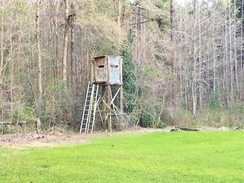 125 Acres Timberland Bordering Nati : Liberty : Amite County : Mississippi