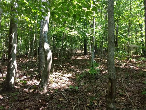 43 +/- Acres Of Excellent Hunting : Sneedville : Hancock County : Tennessee