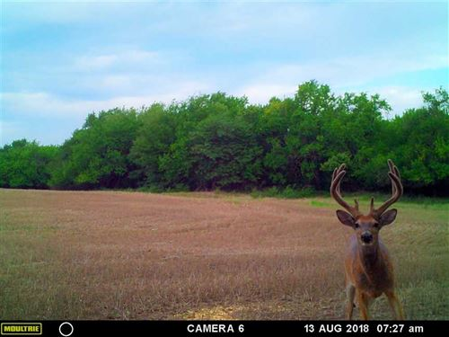160 Acres of Hunting, Tillable : Canton : McPherson County : Kansas