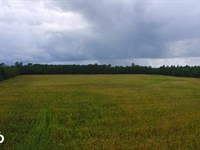 Cherry Grove Farm, Timber, And Recr : Cerro Gordo : Columbus County : North Carolina