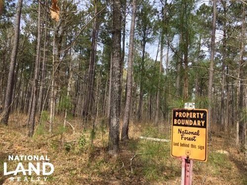 Cooper Ridge National Forest Site : Jamestown : Berkeley County : South Carolina