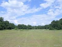 Morriston - 17 Acres : Morriston : Levy County : Florida