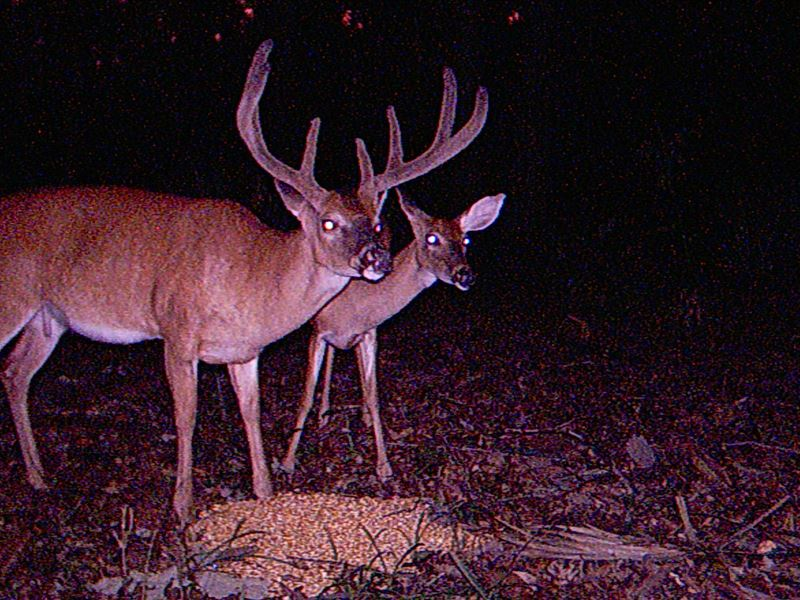 Hunting Millhaven Big Bucks In Ga : Girard : Burke County : Georgia