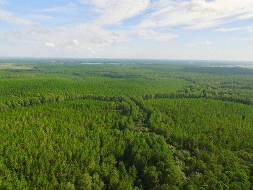 742 Acre Hunting / Timber Tract : Broxton : Jeff Davis County : Georgia