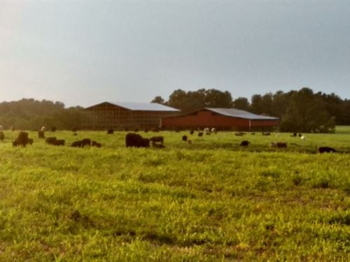 70.30Ac, Creek, 2 Barns, Mtn Views : Lafayette : Macon County : Tennessee