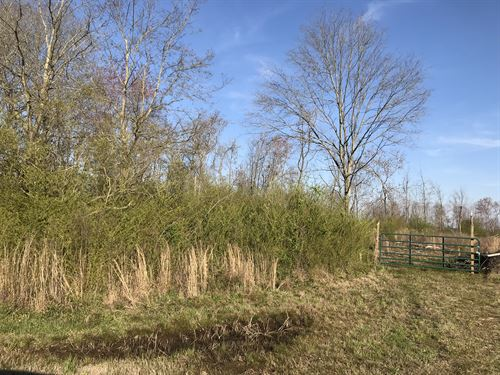 Undeveloped 42 Acres With Privacy : Cullman : Alabama