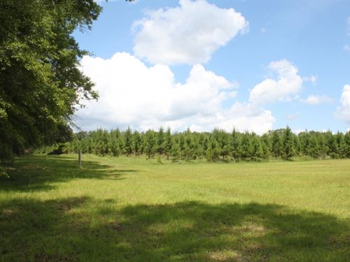 36 Acres In Perry County In Beaumon : McLain : Perry County : Mississippi