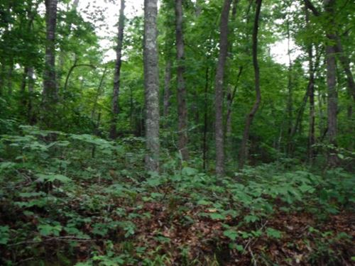 40.85 Ac, Oil Wells, Level Gentle : Sunbright : Morgan County : Tennessee