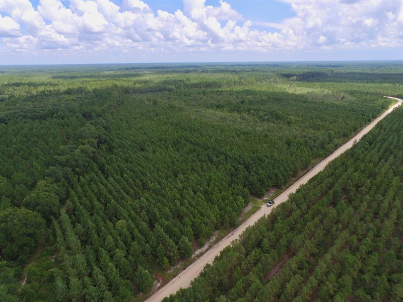64+ Acre Pine and Timberland Tract : Hinesville : Liberty County : Georgia