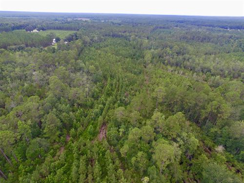 69.54 Ac Monticello Rd Tract : Hinesville : Long County : Georgia
