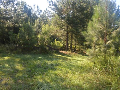 Unrestricted Land In Pittsboro, Nc : Pittsboro : Chatham County : North Carolina