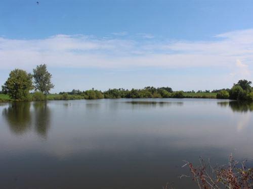 Productive Dryland Farm : Cochran : Bleckley County : Georgia