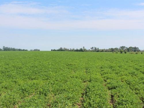 Dryland Farm With 5 Acre Pond : Cochran : Bleckley County : Georgia