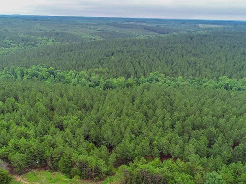 Productive Tree Farm And Hardwoods : Smyrna : York County : South Carolina