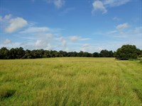 120 Acre Proctor Family Estate : Summerfield : Marion County : Florida