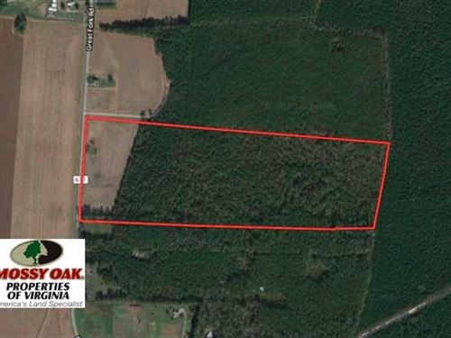 Reduced, 53 Acres of Hunting And : Whaleyville : Suffolk County : Virginia